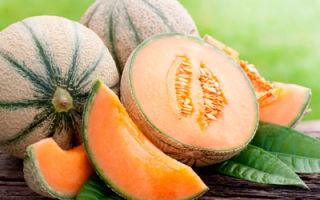 Польза масла семян дыни