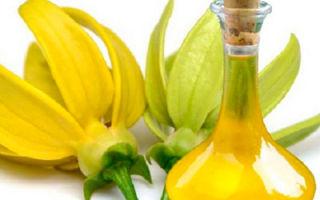 Эфирное масло иланг-иланга и его полезные свойства
